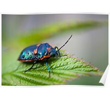 It's A Bugs World Poster