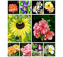 a floral collage Photographic Print