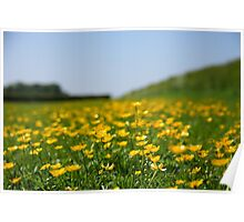 Buttercups in the field Poster
