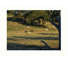 Late Afternoon On The Farm. Art Print