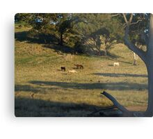 Late Afternoon On The Farm. Metal Print