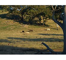 Late Afternoon On The Farm. Photographic Print