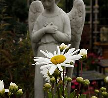 Angel in the Daisies by AnnDixon