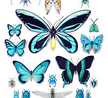 Teal Insect Collection by Vicky Pratt