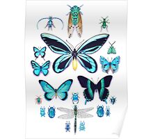 Teal Insect Collection Poster