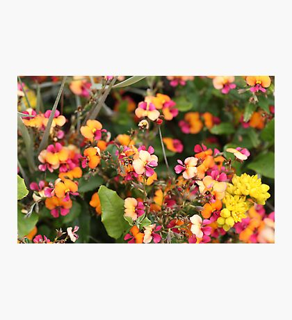 Coral creeper Photographic Print