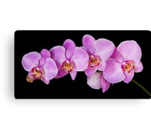 Red Phalaenopsis Orchid Canvas Print