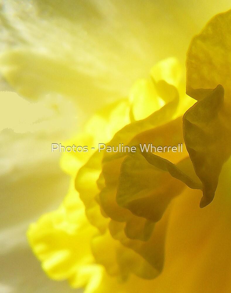 Daffodil abstract by Photos - Pauline Wherrell