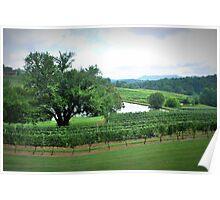Cane Creek Vineyards Poster