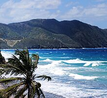 St. Croix US Virgin Island by barnsis
