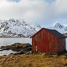 The red shed by Dominika Aniola