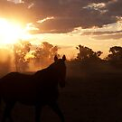 Northern Australian Stock horse by Andrew Bodycoat