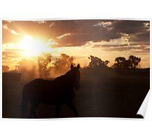 Northern Australian Stock horse Poster