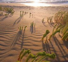 Shadows on the sand  by Linzpiration