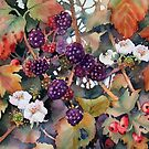 Blackberries and Hawthorn by Ann Mortimer