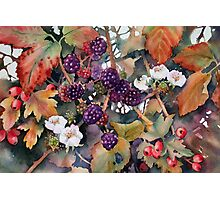 Blackberries and Hawthorn Photographic Print