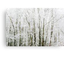Soft Snowy Scene Metal Print