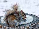 Time for nuts! by barnsis