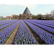 Blue hyacinths in a field Photographic Print