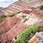 Rainbow Hills by Kim Barton