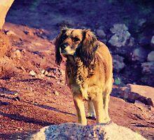 El perro de la playa by Constanza Caiceo