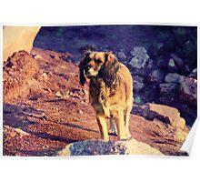 El perro de la playa Poster