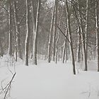 Deep in the Snowy Forest by John Butler