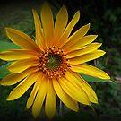 Back Yard Sunshine by Monnie Ryan
