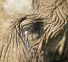 Wrinkles ARE beautiful !!!!!!!!!!!!  by nellie11