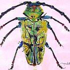 Bug 011 by Cristina-Mary Buzamet