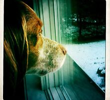 "Doggie Daydreaming: Cosmo by Christine ""Xine"" Segalas"