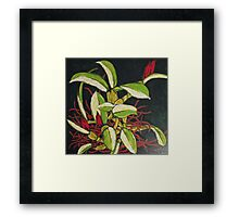 Bitter Fruits Framed Print