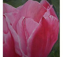 Tulip Blooming - Original Oil on wood panel Photographic Print