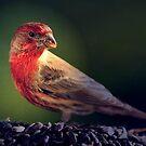 WINTER BIRDS OF OREGON by RoseMarie747