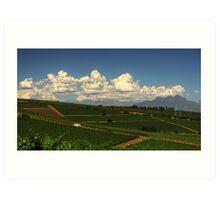 Cape Vineyards Art Print