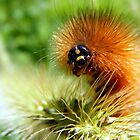 Fuzzy Caterpillar by Dave & Trena Puckett