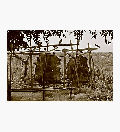 Tanning leather, Malawi Photographic Print