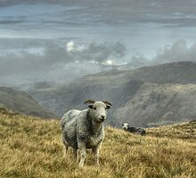 A Lakeland Icon by Jamie  Green