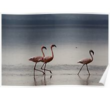 Lesser flamingoes, Lake Nakuru, Kenya Poster