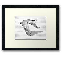 """Northern Bound"" Canadian Goose in flight Framed Print"