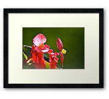 Spring Bloom II Framed Print