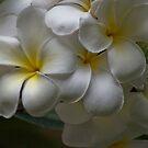 So simple so fragrance... by Kornrawiee