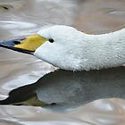 Long Neck Swan by GarethWilton
