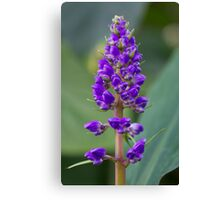 Purple Flower - Lupine Canvas Print
