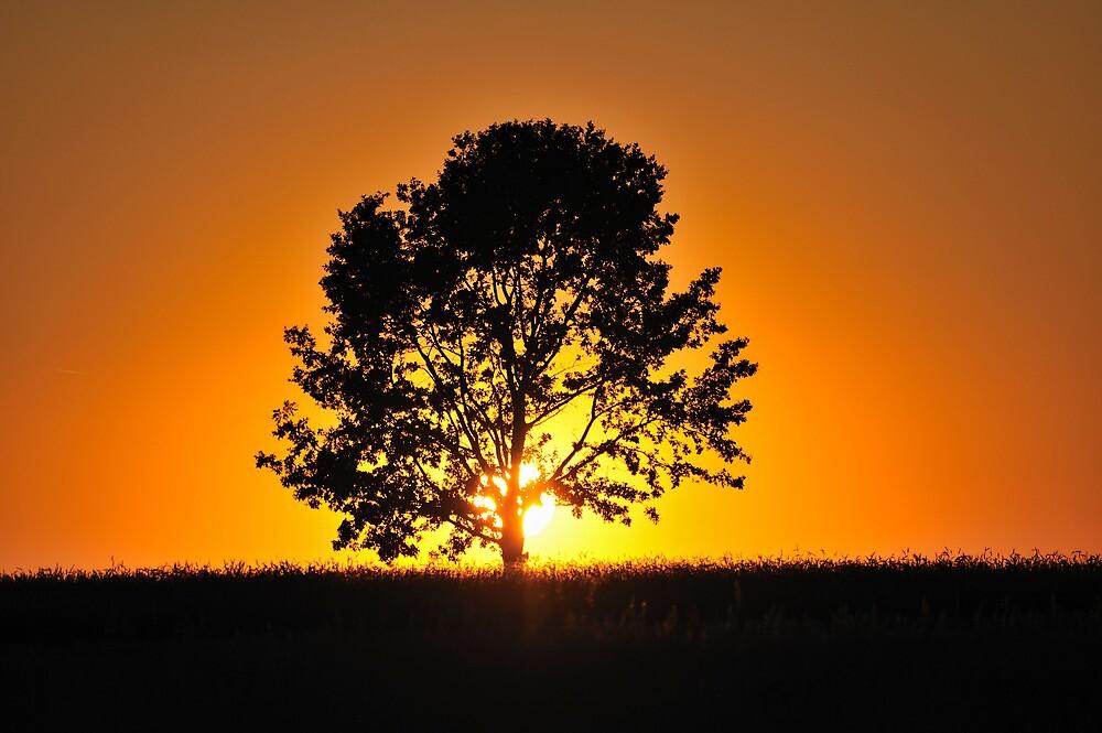 Summer Sunset by Kasia Nowak