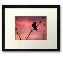 Jackdaw Sunset Framed Print