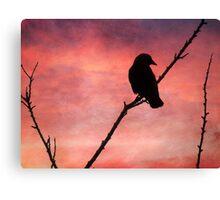 Jackdaw Sunset Canvas Print