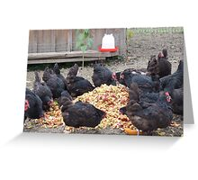 Chickens love apple mash, NY Greeting Card