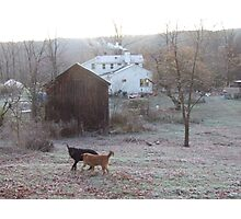 Dogs wrestle in frost, Ithaca NY Photographic Print