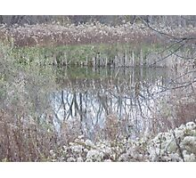 Winter weeds by pond, Ithaca, NY Photographic Print